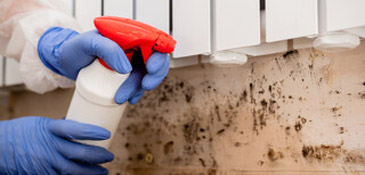 Mold, Dust Mites and Odor